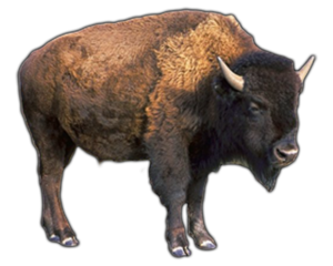 Water Buffalo PNG Pic PNG Clip art