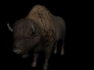 Water Buffalo PNG Transparent Image PNG Clip art
