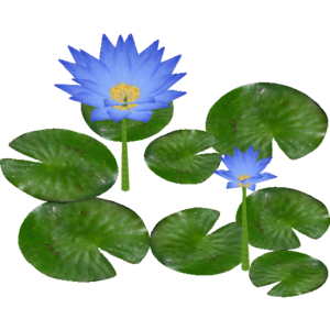 Water Lily PNG Clipart PNG Clip art