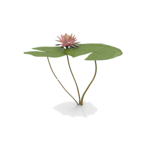 Water Lily PNG Free Download PNG Clip art