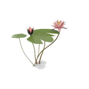 Water Lily PNG Photo PNG clipart