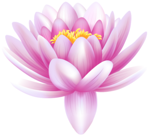 Water Lily PNG Photos PNG Clip art