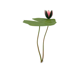 Water Lily PNG Picture PNG Clip art