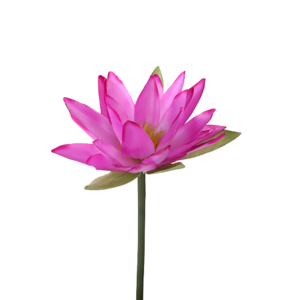 Water Lily Transparent PNG PNG Clip art