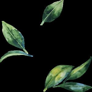 Watercolor Leaves PNG Transparent Image PNG Clip art