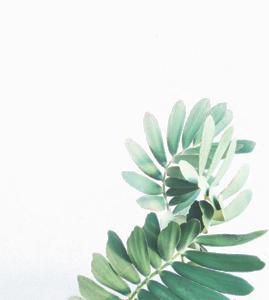 Watercolor Leaves Transparent Background PNG Clip art