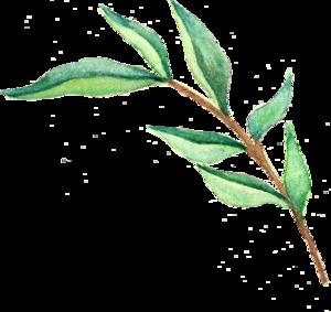 Watercolor Leaves Transparent Images PNG PNG Clip art
