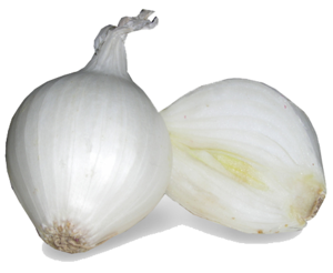 White Onion PNG Image PNG Clip art