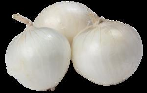 White Onion PNG Clip art