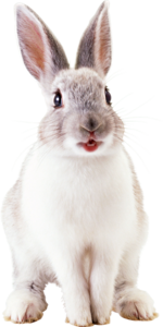 White Rabbit PNG File PNG Clip art