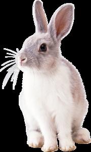White Rabbit PNG Image PNG Clip art
