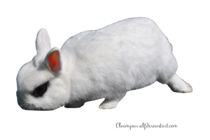 White Rabbit PNG Transparent Image PNG clipart