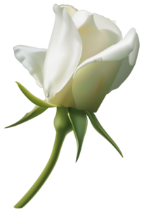 White Rose Bud PNG PNG Clip art