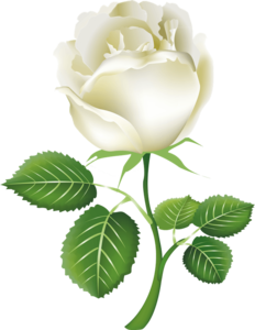White Rose PNG Background PNG Clip art