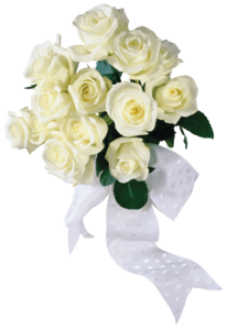 White Rose PNG HD Photo PNG Clip art