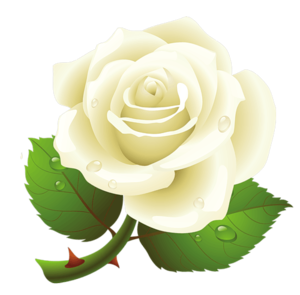 White Rose PNG Image PNG Clip art