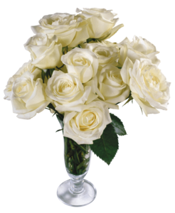 White Rose PNG Transparent File PNG Clip art