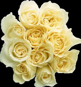White Rose PNG Transparent PNG Clip art