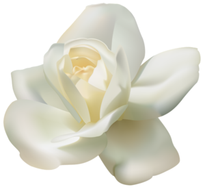 White Rose PNG PNG Clip art