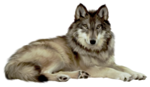 White Wolf PNG PNG Clip art