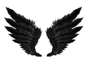 Wings PNG Clipart PNG Clip art
