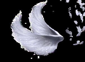 Wings PNG File PNG Clip art