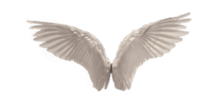 Wings PNG Picture PNG Clip art