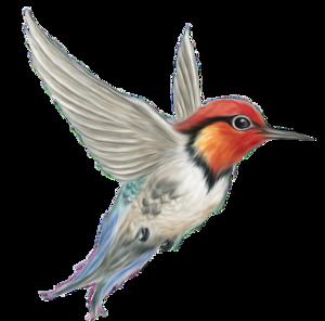 Woodpecker PNG Photos PNG Clip art