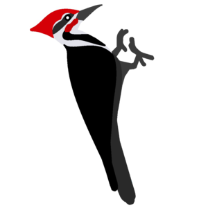Woodpecker PNG Pic PNG Clip art