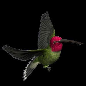 Woodpecker Transparent PNG PNG Clip art