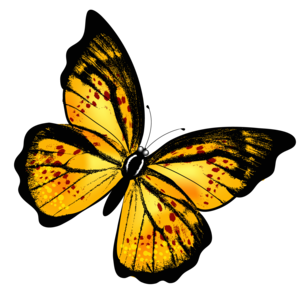 Yellow Butterfly PNG PNG icon