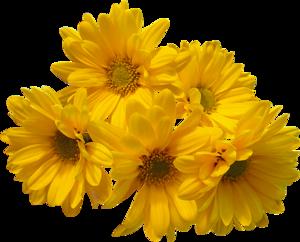 Yellow Flowers Bouquet PNG Transparent Image PNG Clip art