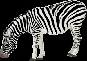 Zebra PNG Clipart Background PNG Clip art