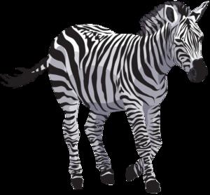 Zebra PNG File Download Free PNG Clip art