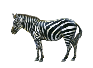 Zebra PNG HD Photo PNG Clip art
