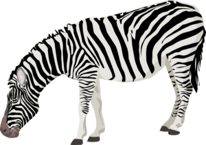 Zebra PNG Photos PNG Clip art