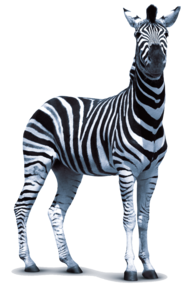 Zebra PNG Transparent Photo PNG Clip art