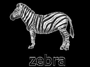 Zebra PNG Transparent PNG Clip art