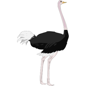 Ostrich icon png
