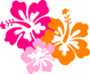Hibiscus 8 icon png
