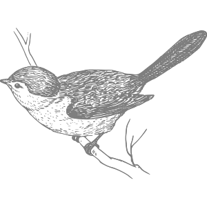Bird On Branch icon png