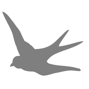 Dark Gray Swallow