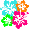 Hibiscus Birds Branch icon png