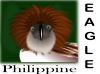 Philippine Eagle icon png