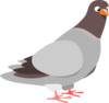 Pigeon icon png