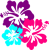 Hibiscus Flowers icon png