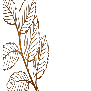 Leaves icon png