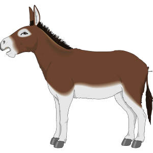 Brown And White Donkey Side View