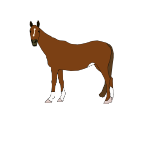 Horse Cartoon design