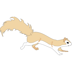 Landing Squirel icon png
